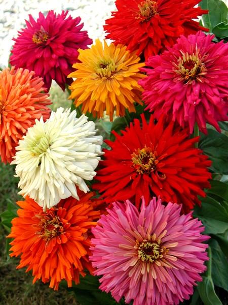 Nasiona Kwiaty Warzywa Zioła